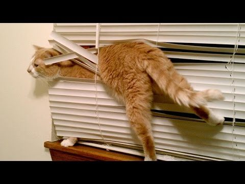 Cats, the funniest pets that make us laugh – Funny cat & kitten compilation