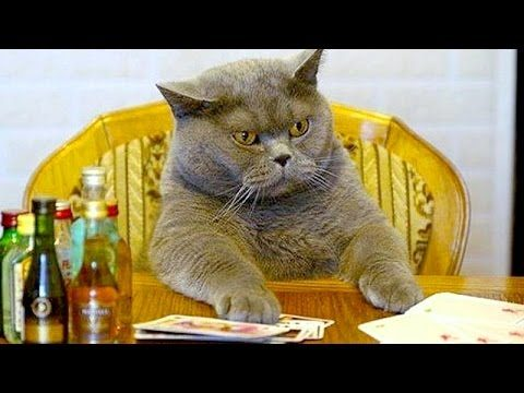 Humorous videos of cats, dogs and other animals – Funny and cute compilation – Watch and laugh!