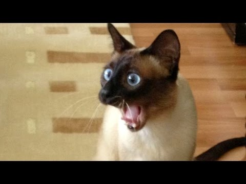 Funny Dog And Cat Videos You Tube
